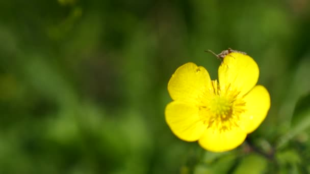 Detailní záběr z brouka na zářivě krásný žlutý květ