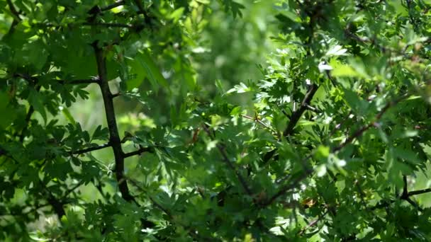 Branches of a tree with green leaves