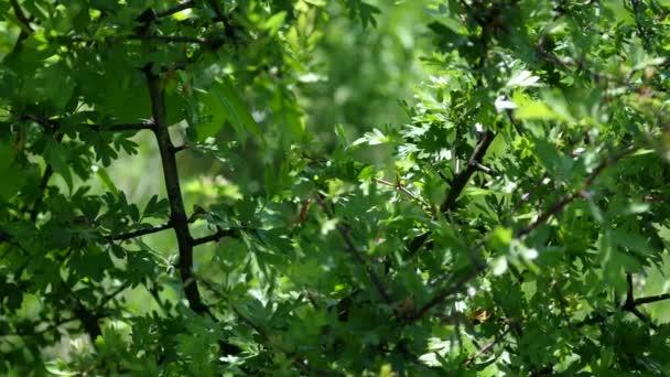 Äste eines Baumes mit grünen Blättern