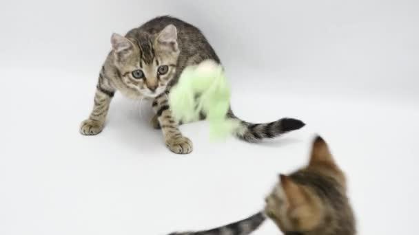Katzen spielen mit Spielzeug auf weißem Hintergrund