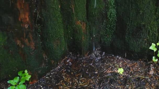 Closeup pramenité vody jak to padá a kapky na mech zelený