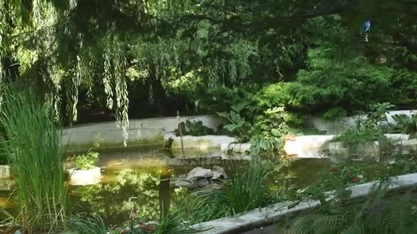 Zahradní jezírko s vodním rostlinstvem