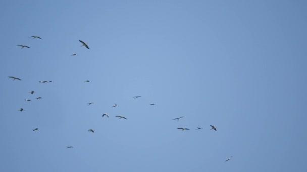 Hejno racků a ptáků letící vysoko na obloze