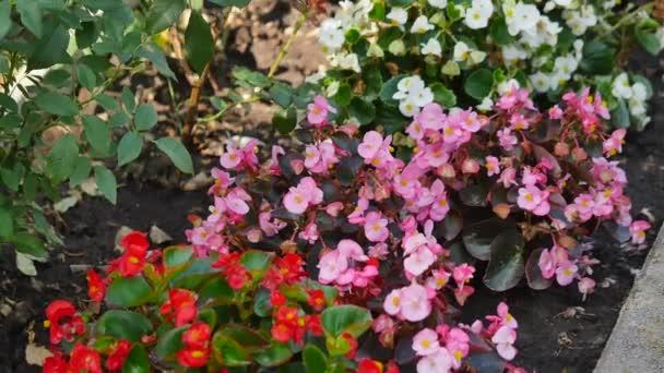 Verschiedene Arten Und Farben Von Blumen Auf Blumen Wand Schoner