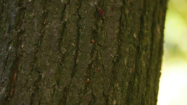 őszi park háttér fatörzsek. szelektív összpontosít. közelről