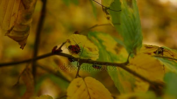 snímek slunce lesklý v podzimním lese