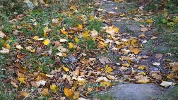 Autumn Leaves Falling in autumnal Park