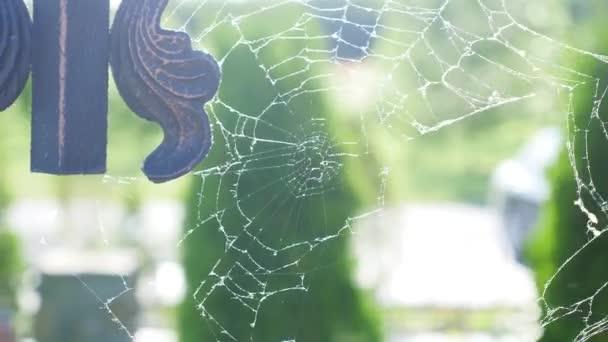 Ragnatela o spider web con alcune gocce d 39 acqua all 39 inizio for Finestra con gocce d acqua