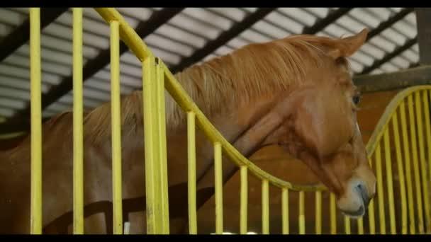 fekete fehér és barna ló a stabil