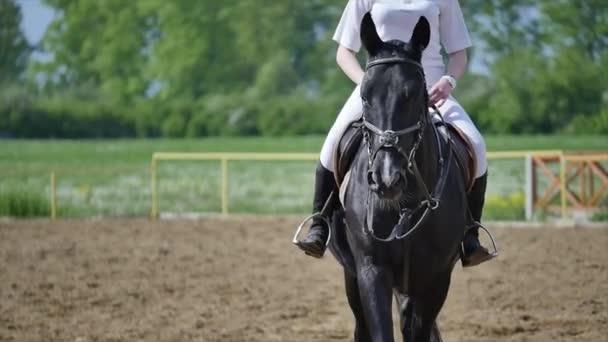 Dressurpferd und Reiterin im Viereck in Zeitlupe