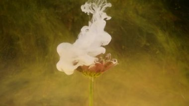Ink in water with a flower. Multicolored ink beautifully falls on the flowers immersed in water