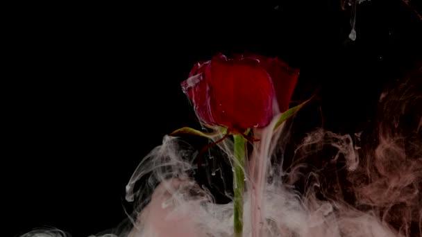 Úžasně krásný atmosférický snímek krásné růže s inkoustem ve vodě