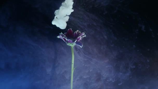 Květina s inkoustem abstrakt na černém pozadí