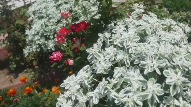 Květiny v zahradě u domu