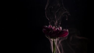 Flower with ink abstract on black background