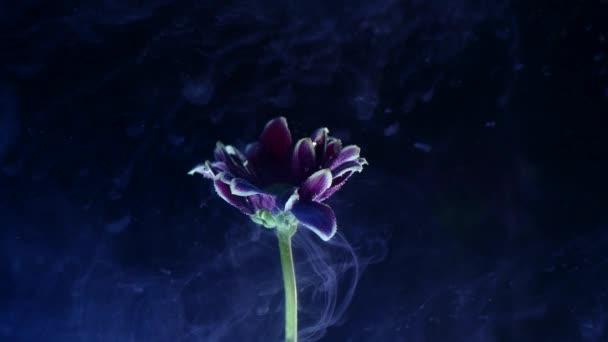 Inkoustu ve vodě s květinou. Vícebarevný inkoust krásně připadá na květiny ponořen ve vodě