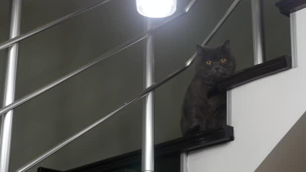 Lustig aussehende Katze mit schwarzer Fliege