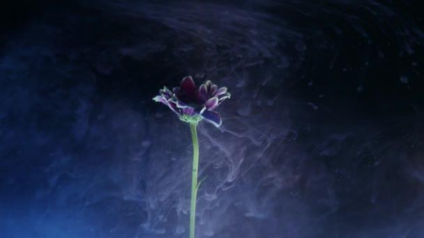 Blume mit Tusche abstrakt auf schwarzem Hintergrund