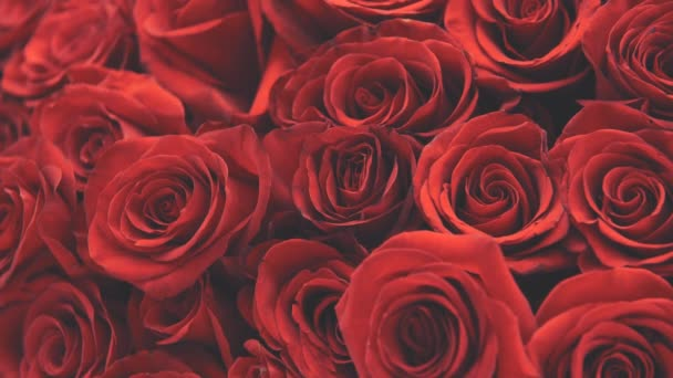 Cropped video of bouquet of big tender red roses. Camera is moving up.