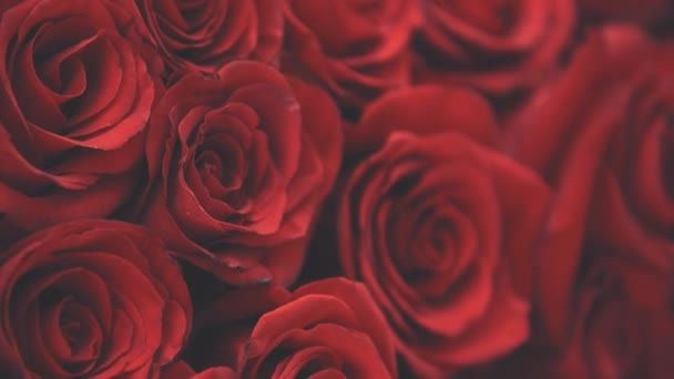 Touching blurred cropped video of beautiful bouquet of large red roses.