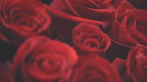 Blurred cropped video of beautiful bouquet of large red roses.