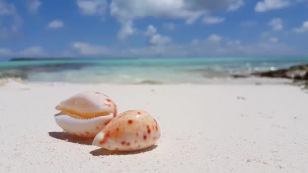 v02713 Maledivy krásné pláže pozadí bílé písečné tropický ráj ostrov s modrou oblohu moře vody oceánu 4k mušli