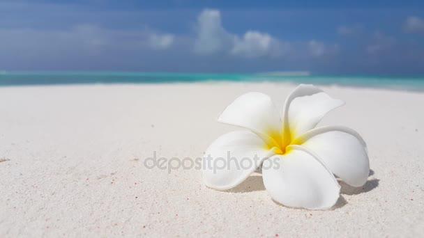 v02969 Maledivy krásné pláže pozadí bílé písečné tropický ráj ostrov s modrou oblohu moře vody oceánu 4k květ