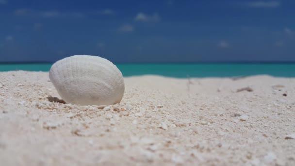 v01007 Maledivy krásné pláže pozadí bílé písečné tropický ráj ostrov s modrou oblohu moře vody oceánu 4k mušli