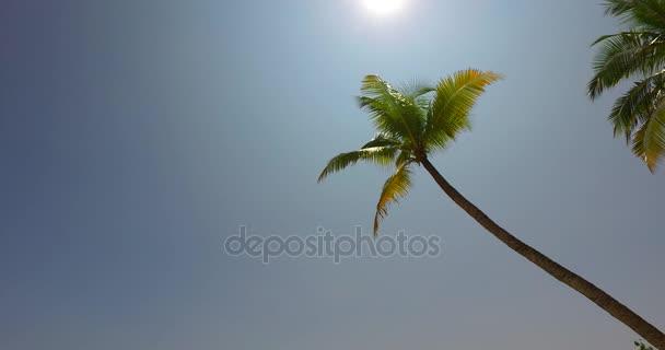 v01574 Maledivy krásné pláže pozadí bílé písečné tropický ráj ostrov s modrou oblohu moře vody oceánu 4k palmy