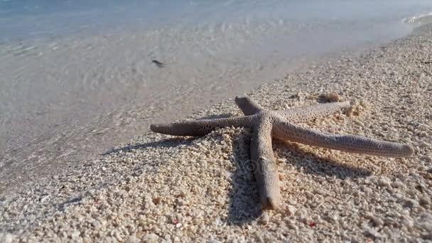 v01751 Maledivy krásné pláže pozadí bílé písečné tropický ráj ostrov s modrou oblohu moře vody oceánu 4k hvězdice
