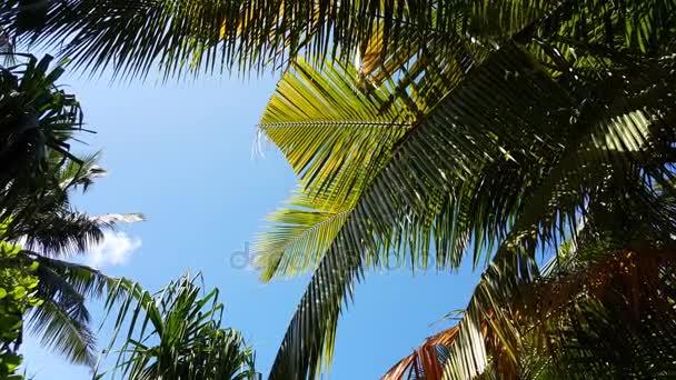 v01873 Maledivy krásné pláže pozadí bílé písečné tropický ráj ostrov s modrou oblohu moře vody oceánu 4k palmy
