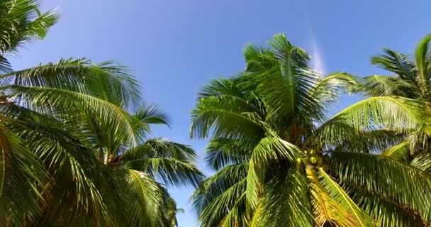 v00254 Maledivy krásné pláže pozadí bílé písečné tropický ráj ostrov s modrou oblohu moře vody oceánu 4k palmy