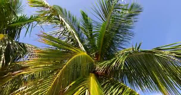 v00255 Maledivy krásné pláže pozadí bílé písečné tropický ráj ostrov s modrou oblohu moře vody oceánu 4k palmy