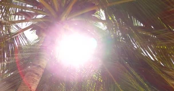 v00636 Maledivy krásné pláže pozadí bílé písečné tropický ráj ostrov s modrou oblohu moře vody oceánu 4k palm stromy slunce