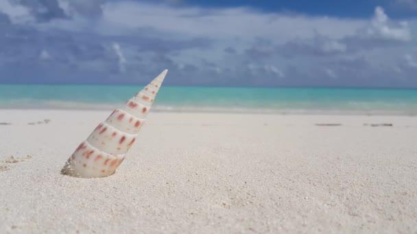 v00651 Maledivy krásné pláže pozadí bílé písečné tropický ráj ostrov s modrou oblohu moře vody oceánu 4k mušli