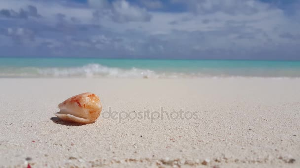 v00975 Maldives beautiful beach background white sandy tropical paradise island with blue sky sea water ocean 4k hermit crab