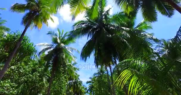 v07970 Maledivy pozadí krásné bílé písčité pláže s palmami na slunečné tropické paradise island s aqua blue sky moře vody oceánu 4k