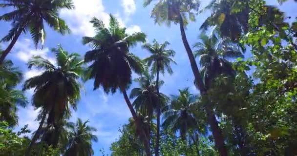 v07962 Maledivy pozadí krásné bílé písčité pláže s palmami na slunečné tropické paradise island s aqua blue sky moře vody oceánu 4k