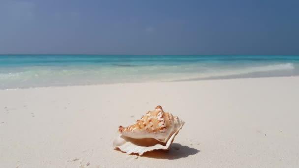 v07600 Maledivy mušle bílá písečná pláž na ostrově sunny tropický ráj s aqua blue sky moře vody oceánu 4k