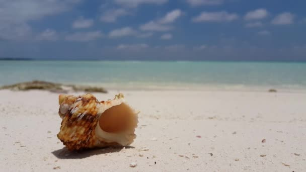 v07555 Maledivy mušle bílá písečná pláž na ostrově sunny tropický ráj s aqua blue sky moře vody oceánu 4k