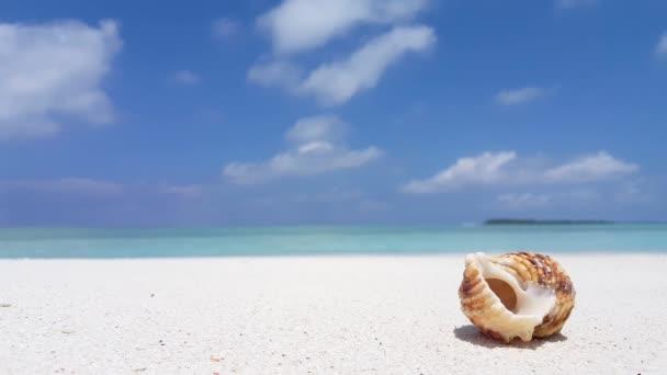 v07541 Maledivy mušle bílá písečná pláž na ostrově sunny tropický ráj s aqua blue sky moře vody oceánu 4k