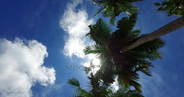 v07965 Maledivy pozadí krásné bílé písčité pláže s palmami na slunečné tropické paradise island s aqua blue sky moře vody oceánu 4k