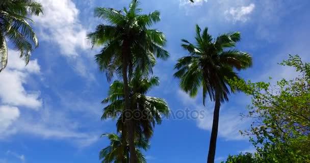 v07957 Maledivy pozadí krásné bílé písčité pláže s palmami na slunečné tropické paradise island s aqua blue sky moře vody oceánu 4k