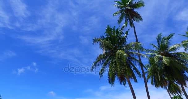 v07961 Maledivy pozadí krásné bílé písčité pláže s palmami na slunečné tropické paradise island s aqua blue sky moře vody oceánu 4k