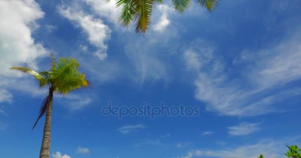 v07954 Maledivy pozadí krásné bílé písčité pláže s palmami na slunečné tropické paradise island s aqua blue sky moře vody oceánu 4k