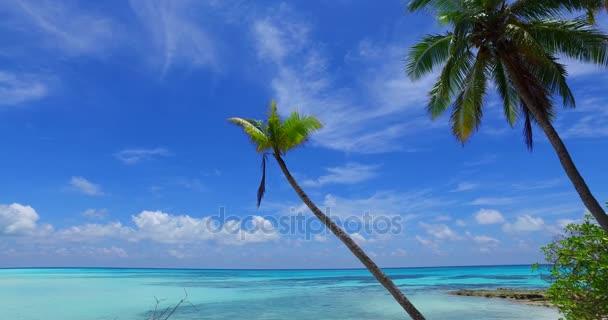 v07999 Maledivy pozadí krásné bílé písčité pláže s palmami na slunečné tropické paradise island s aqua blue sky moře vody oceánu 4k