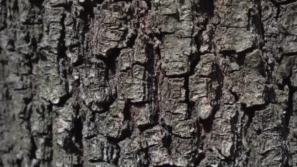 kůry stromů podél kmene