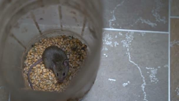 Kleine Maus ist im Gefäß
