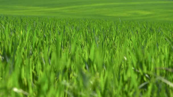 pole zelené trávy