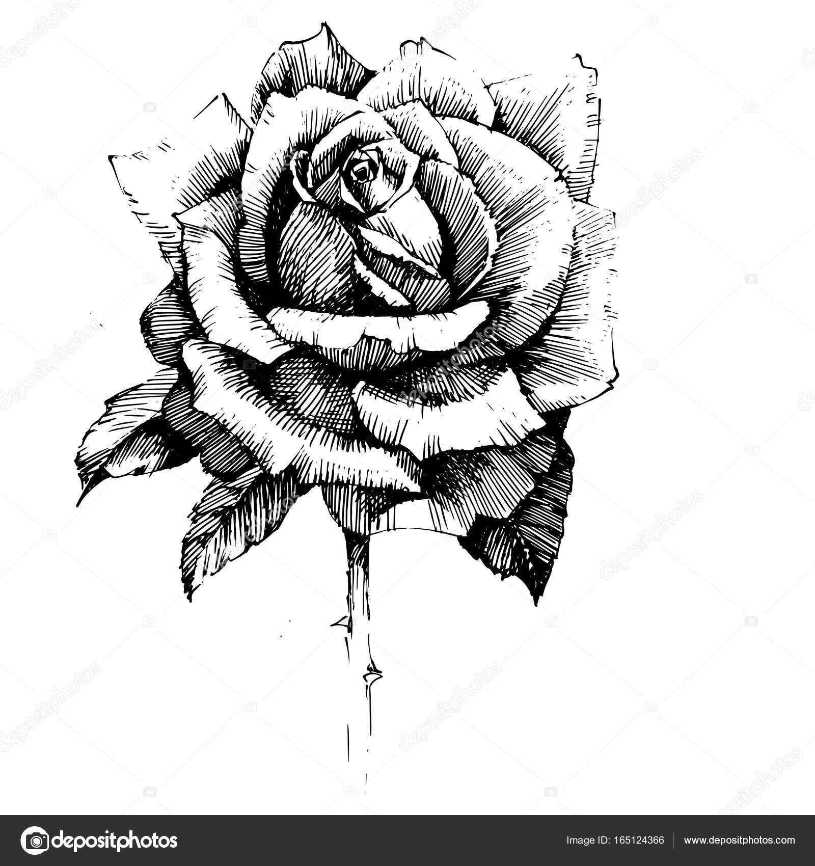 Dessin Fleurs Rose Ink Image Vectorielle Acantstudio C 165124366